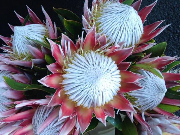 hawaiian-flowers-200
