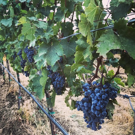 Washington Vineyards
